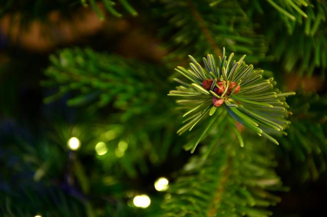 Christmas trees can be recycled at any Argyll and Bute Council recycling centre