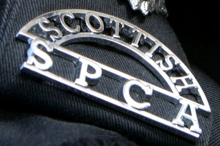 Investigation launched after dog found dead in Kilwinning