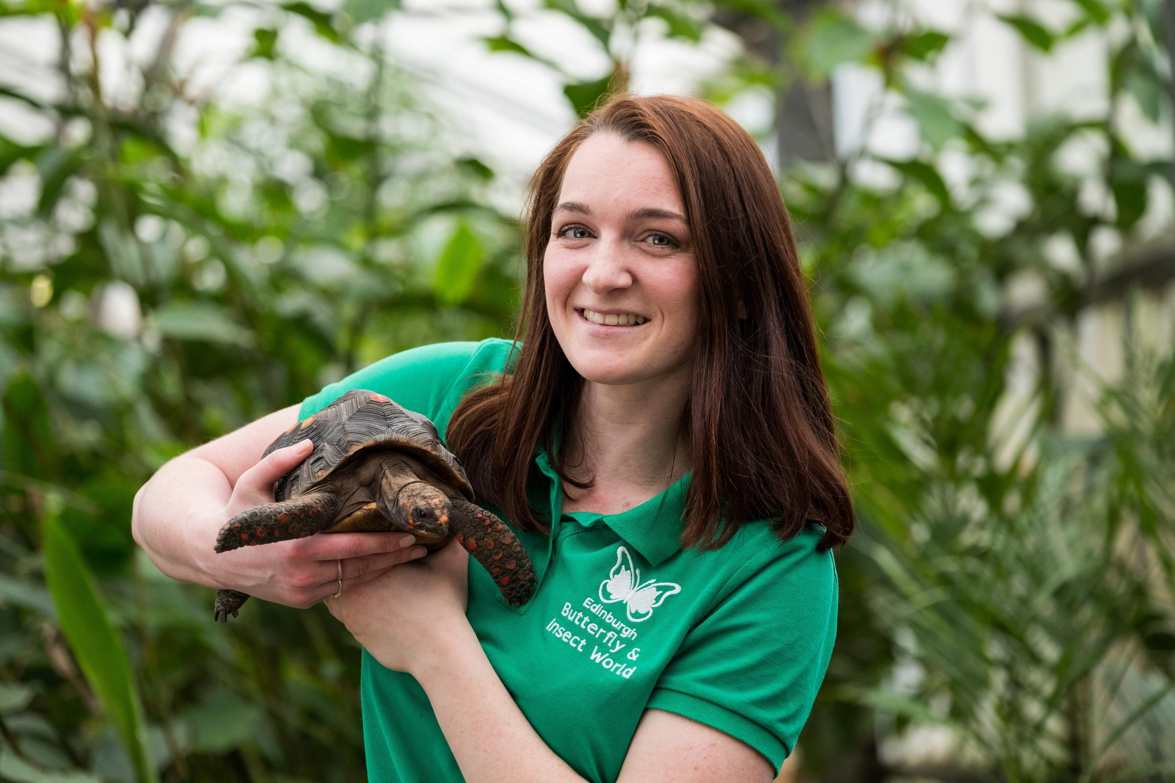 Huck the red-footed tortoise is welcomed back to Butterfly and Insect World, by keeper, Lyndsey Paget (Stuart Nicol/PA)